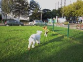 I tought them the running around, they were not playing at first!!