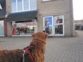Yes, that's the shop of the human pup!