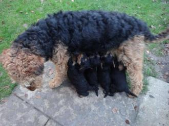 Mummy It and her babies