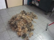 My furry coat at teh hairdresser's!