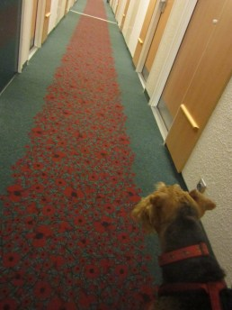 Look mum, lots of poppies on this floor!
