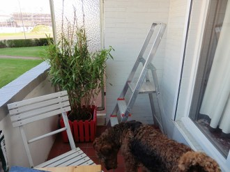 Me, on that ladder? No way! Your job, mum!