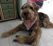 My piggie says I'm beautiful!