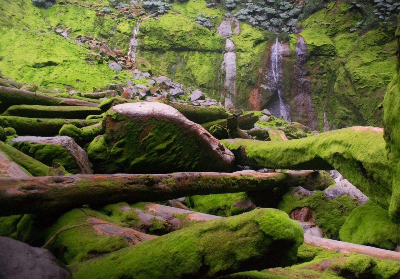 Catarata del toro, Costa Rica, mossy rocks