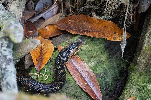 Brown water snake, 5 Things To Do At Week Wachee Springs, Florida