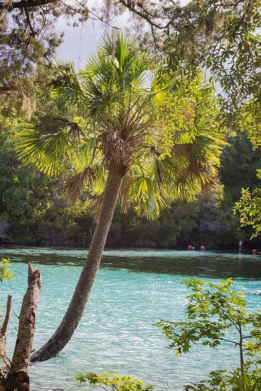 Silver Glen Springs, Ocala National Forest, Florida