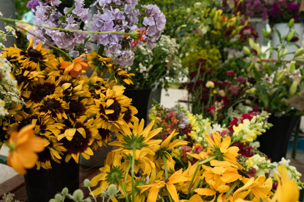 USA Photography USA Photography What To Do In Telluride: Farmer's Market