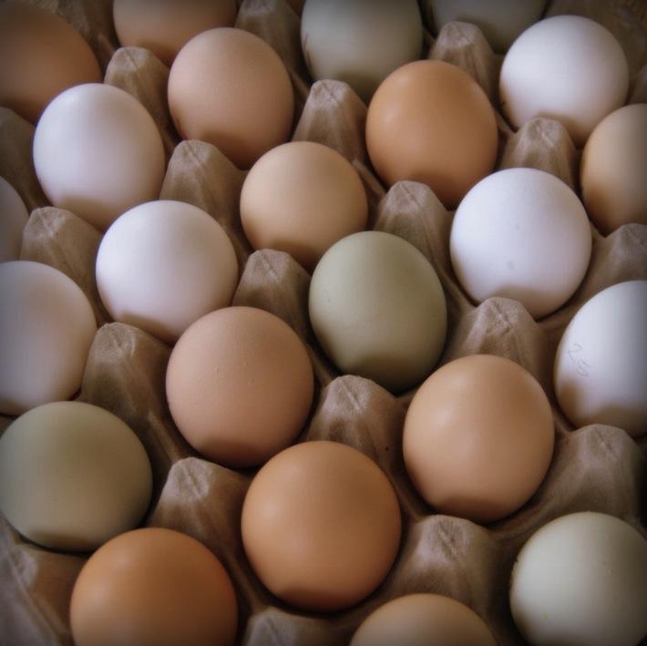lotsa eggs