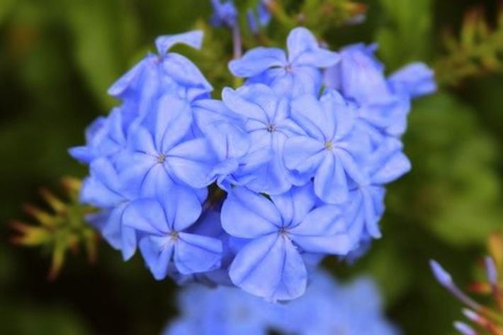 floral inspiration hawaii