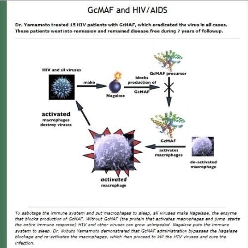 GcMAF & HIV