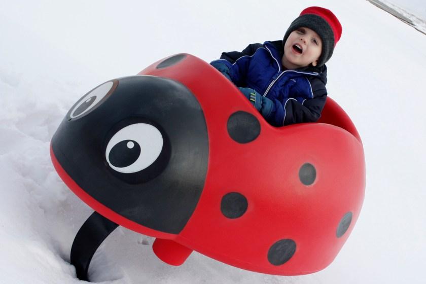 _mg_3005-the-ladybug