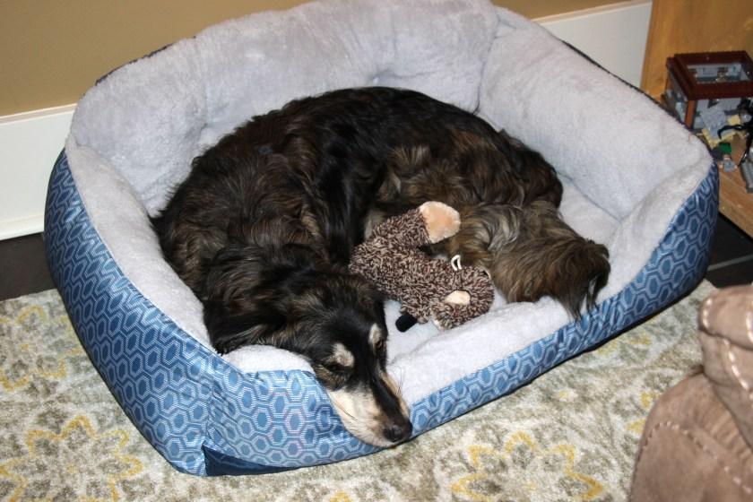 IMG_1204 dog bed corner