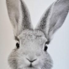 Budget-Friendly Bunny Prints