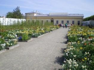 The Dutch garden (Flower garden)