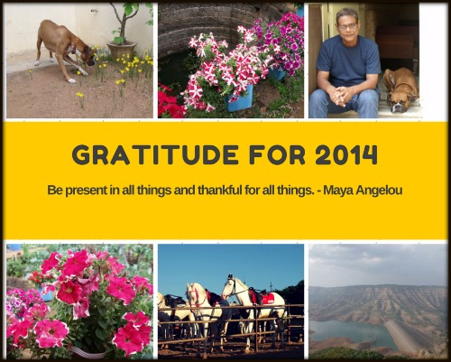 gratitude for 2014
