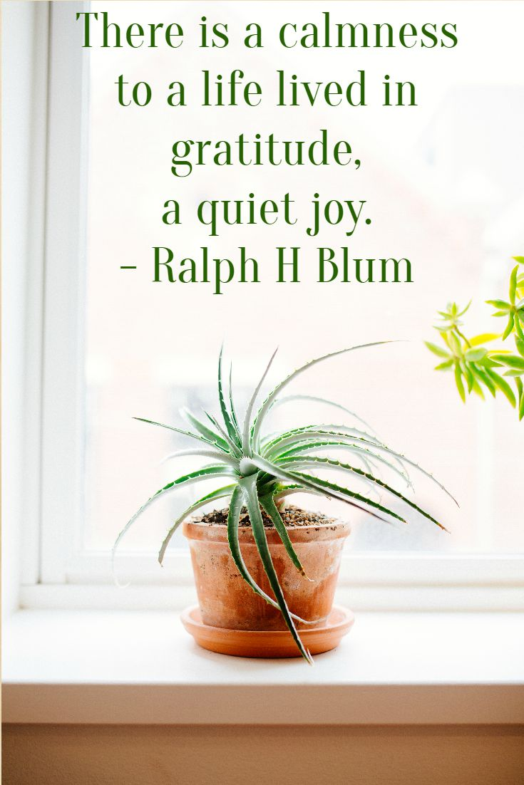 the-quiet-joy-of-gratitude