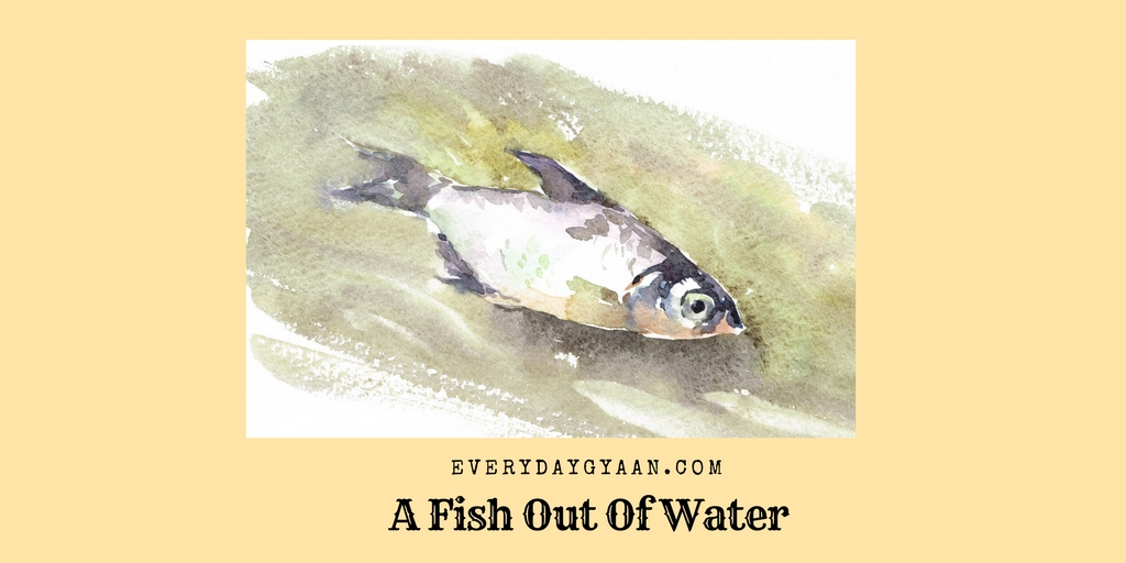A Fish Out Of Water #FridayReflections