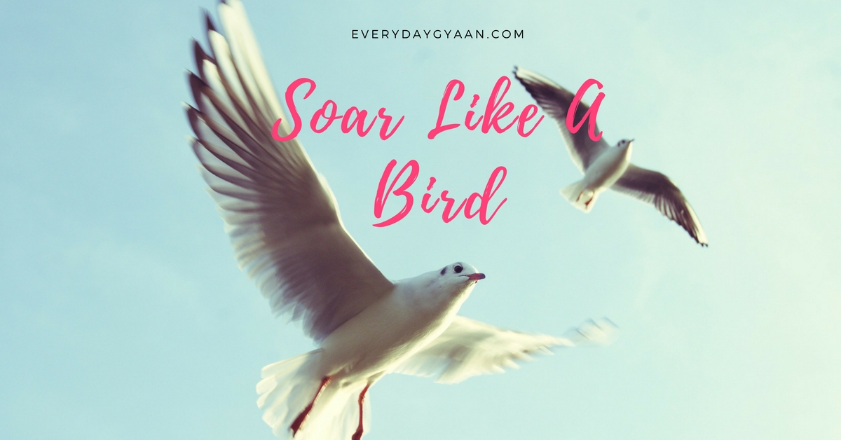 Soar Like A Bird