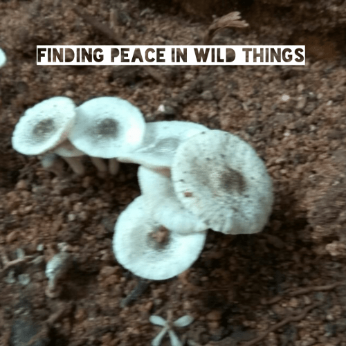 finding-peace-in-wild-things