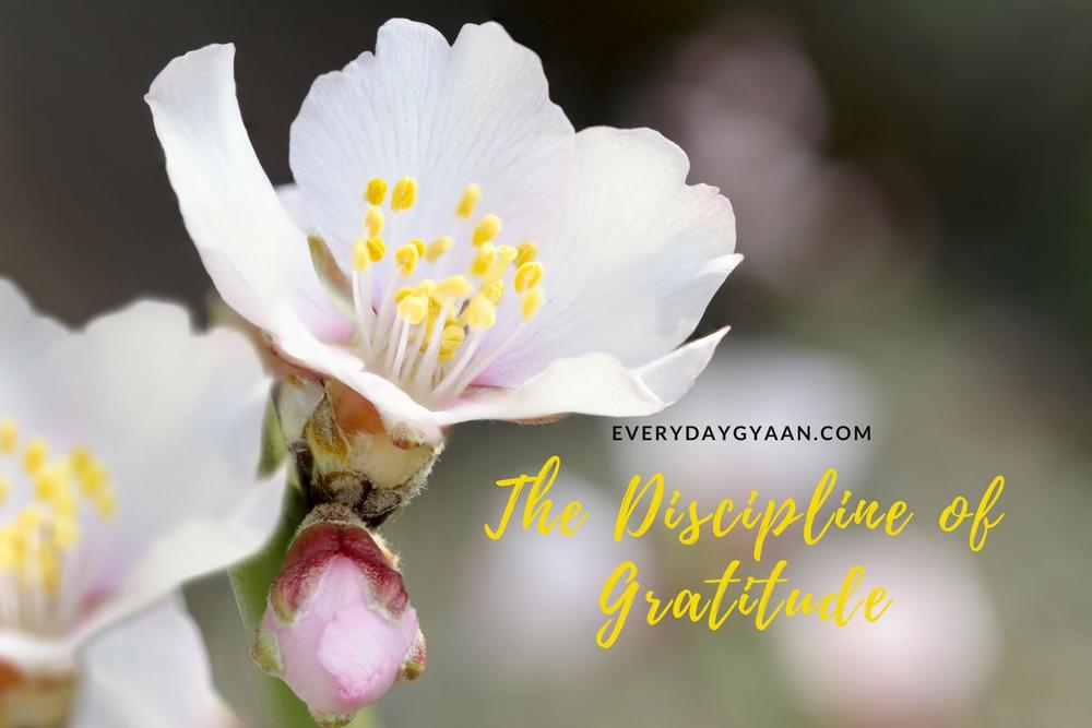 The Discipline Of Gratitude #WorldGratitudeDay #everydaygratitude