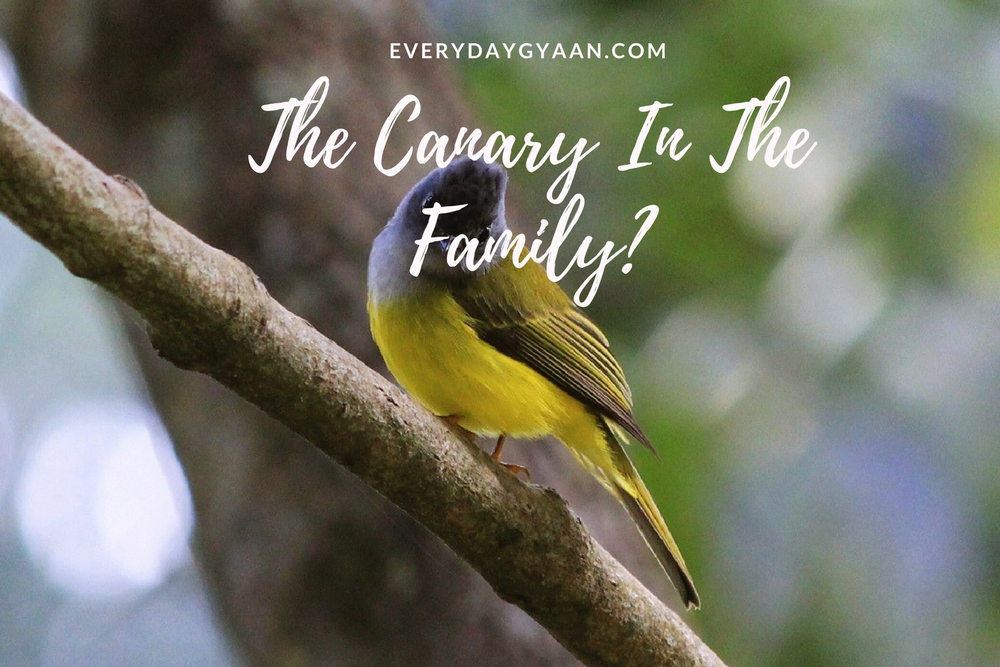 The Canary In The Family