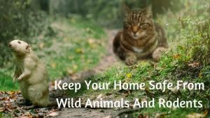 Keep Your Home Safe From Wild Animals And Rodents