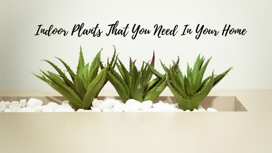 Indoor Plants That You Need In Your Home