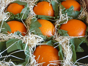 Ambrosia — When Life Gives You Oranges