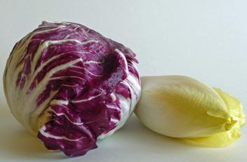 Waldorf Salad with Meyer Lemon Vinaigrette – A Standout