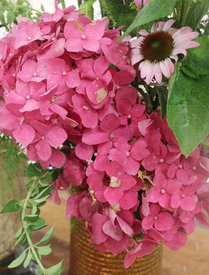 Pink Hydrangea   The Everyday Home