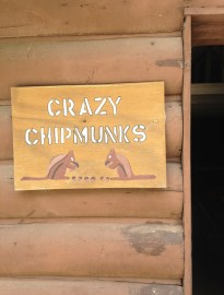 Crazy Chipmunks