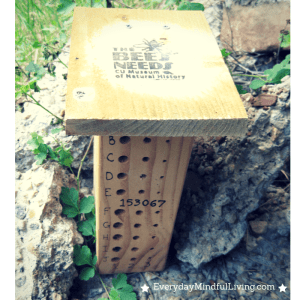 Citizen Science: Keeping a Bee Box