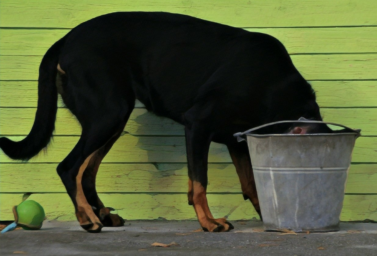 Dog with head in bucket