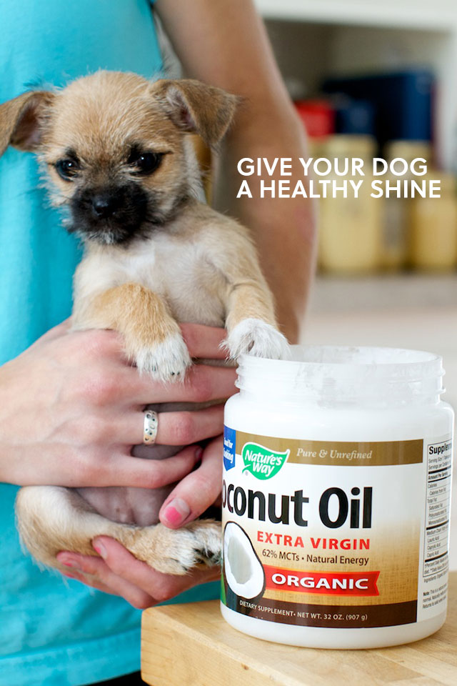 give your dog a healthy shine