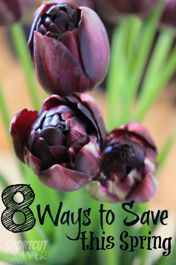 ways to save this spring
