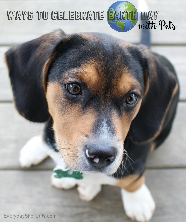 Ways to Celebrate Earth Day with Pets