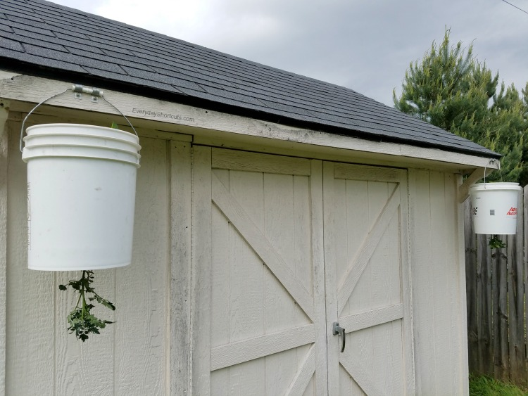 5 gallon buckets attached to shed