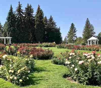 image of rose garden manito