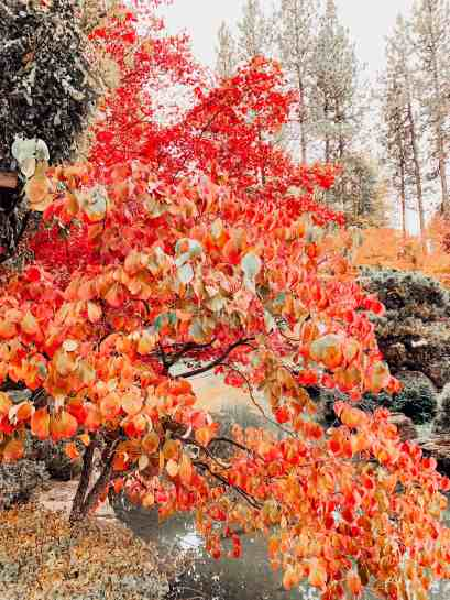 beautiful fall colors in spokane