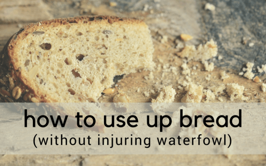 Use up bread without injuring ducks