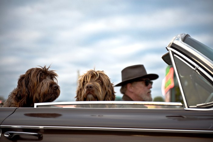 Don't overlook pets when considering your perfect family road trip vehicle
