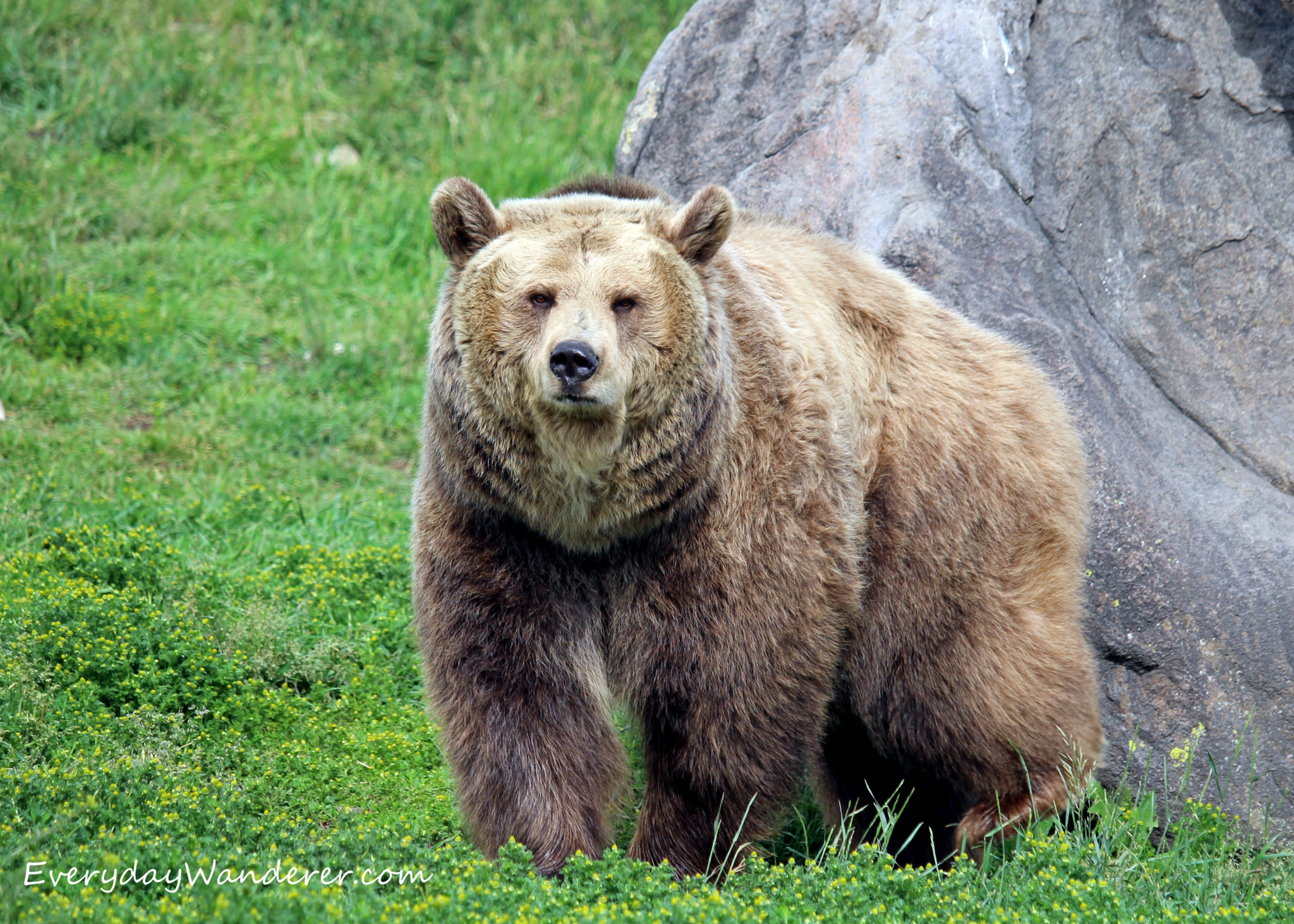 Be Bear Aware with These Tips to Avoid (and Survive) a Bear Encounter