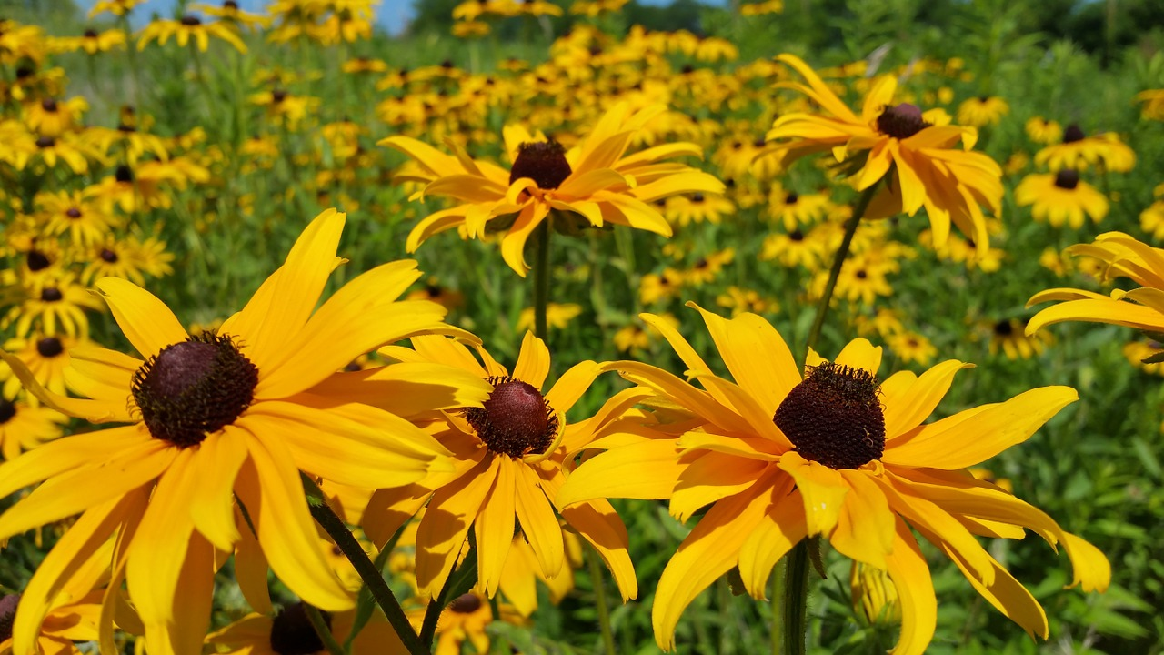 A Guide to Kansas Wildflowers by Season: Spring, Summer, and Fall