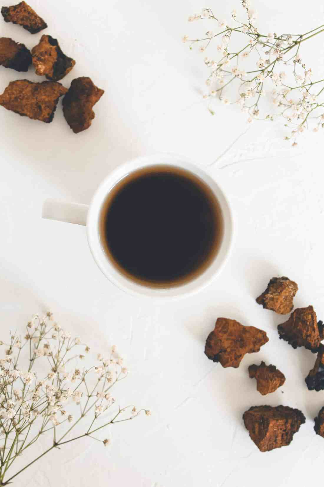 Chaga has been used for centuries due to its mass healing capabilities. Learn how to brew chaga tea, the many benefits of the chaga mushroom, & more!