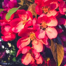 gfancy_blossoms.bright