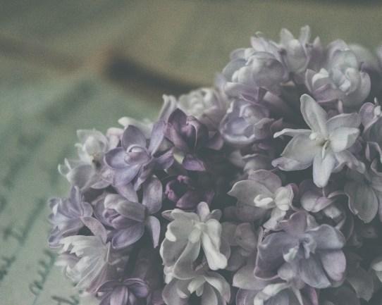 gfancy_lilac_oldletter