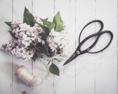 gfancy_lilacs,scissors_flatlay