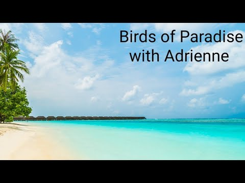 Yoga Tutorial for Birds of Paradise