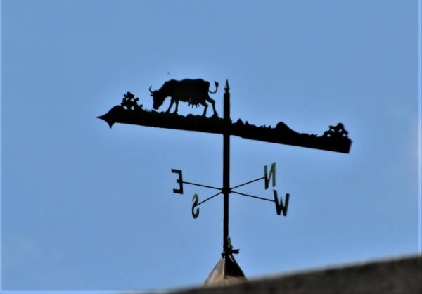 Weekend Weathervanes: Milking Cow on Rt. 1 in Bridgeport, CT.