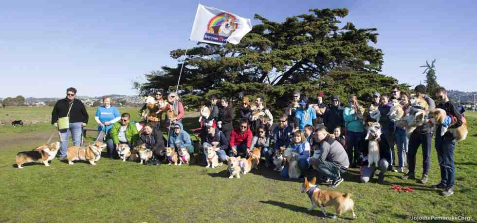 Corgi Meetup Point Isabel